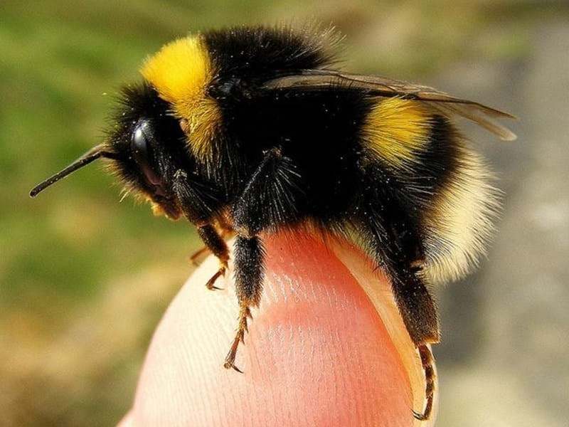 TO BEE OR NOT TO BEE? SPOILER ALERT - IT'S 'TO BEE'.